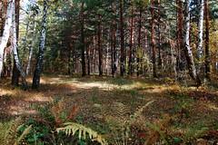 DSC_6003 (Rustam Bikbov) Tags: autumn september 2012    sverdlovskoblast
