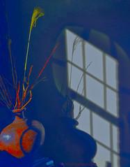 Morning Light (creepingvinesimages - struggling to keep up!) Tags: blue shadow nikon artistic vase sliders hss windowshadow driedreeds d7000 topazadjust pse14 topazrestyle