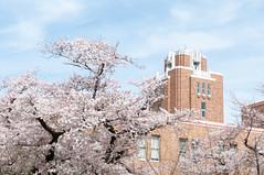 (Wunkai) Tags: japan  cherryblossom sakura    ibarakiken mitoshi sannomaru