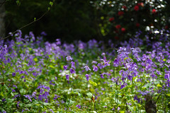 20160410-DSC_7372.jpg (d3_plus) Tags: sky plant flower history nature japan trekking walking temple nikon scenery shrine bokeh hiking kamakura fine daily bloom 日本 28105mmf3545d nikkor 花 寺院 自然 kanagawa 神社 寺 shintoshrine 空 散歩 buddhisttemple dailyphoto sanctuary 風景 植物 thesedays kitakamakura 鎌倉 28105 景色 歴史 fineday 神奈川県 ハイキング 28105mm 日常 holyplace historicmonuments 古都 zoomlense ancientcity 北鎌倉 ボケ トレッキング 晴れ ニコン ズーム 聖地 28105mmf3545 d700 281053545 nikond700 歴史的建造物 aiafzoomnikkor28105mmf3545d 28105mmf3545af aiafnikkor28105mmf3545d