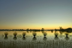 Good morning everyone. - Explore - (Hein Breckmann) Tags: dawn flooding