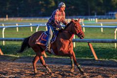 Oklahoma Track Workout Series 39 (Samantha Decker) Tags: horse ny newyork upstate saratogasprings nyra canonef135mmf2lusm oklahomatrack canoneos60d samanthadecker