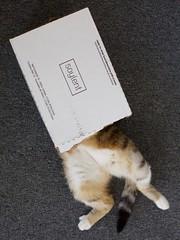 My cat loves Soylent too (mayaibuki.me) Tags: food cat vegan tech kitty bro soylent superfood