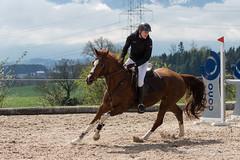 DSC08851_s (AndiP66) Tags: gelb springen hildisrieden reitsportcenter estermann traselinge 2016 september pferd horse schweiz switzerland kantonluzern cantonlucerne concours wettbewerb horsejumping equestrian sports springreiten pferdespringen pferdesport sport sony sonyalpha 77markii 77ii 77m2 a77ii alpha ilca77m2 slta77ii sony70400mm f456 sony70400mmf456gssmii sal70400g2 andreaspeters luzern ch