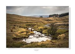 The wild and beautiful Sarn Helen (saundersc29) Tags: sky beauty southwales landscape stream sigma breconbeacons sarnhelen nikond750 mountanponys