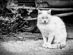 Stray Snowy . (kitchou1 Thanx 4 UR Visits Coms+Faves.) Tags: world street bw france animals port cat season landscape spring europe exterior harbour south nb printemps saison