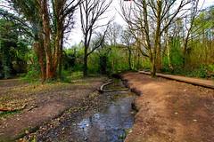 Moseley Bog (paulinej9) Tags: uk canon birmingham lordoftherings tolkien moseley thehobbit moseleybog shirecountrypark joyswood