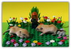 gerbil (peter-ray) Tags: flowers plant nature gerbil rat ray lego peter diorama minifigure moc minifigures nx2000