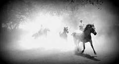 Saliendo 'e la polvareda (Eduardo Amorim) Tags: horses horse southamerica argentina criollo caballo cheval caballos cavalos pferde herd cavalli cavallo cavalo gauchos pferd pampa hest hevonen chevaux gaucho 馬 américadosul häst gaúcho 말 campero amériquedusud provinciadebuenosaires лошадь gaúchos 马 sudamérica sanantoniodeareco suramérica américadelsur סוס areco südamerika gregge crioulo troupeau caballoscriollos herde criollos حصان tropillas άλογο pampaargentina camperos americadelsud tropilhas tropilla ม้า crioulos cavalocrioulo americameridionale tropilha caballocriollo campeiros campeiro eduardoamorim cavaloscrioulos iayayam yamaiay pampaargentino ঘোড়া