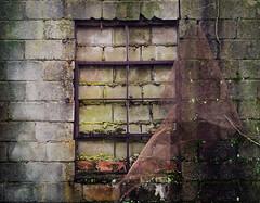 'Apeeling' View (Doug NC) Tags: wall rust mesh decay cement tracks southcarolina vine screen brickwall frame anchor cinderblock fatigue windowframe redbricks rustyandcrusty railroadtracks anotherbrickinthewall enmeshed blockedview rustyscreen