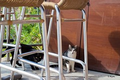Kitties (Kym.) Tags: cat restaurant spain chair kitty andalusia nerja thegang cafe andalucia otherpeoplesgang