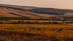 Evening moods (Ilkin Kangarli) Tags: sunset summer mountains field forest evening azerbaijan caucasus закат лес горы лето вечер поле кавказ ismayilli азербайджан