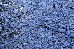 Snowy Branches (Luca Bobbiesi) Tags: wood trees snow alberi branch neve bosco canonef24105mmf4lisusm trentinoaltoadige canoneos7d piandeipradi