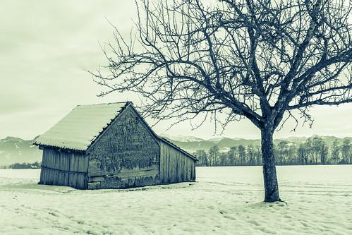(C)old Barn