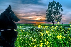 Nut (abel.maestro) Tags: sunset flores flower tree arbol atardecer flor belga amarillo nut maestro abel pastor toma flowres