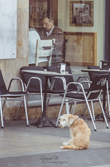Esperando (Sergio Bjar) Tags: barcelona street urban dog dogs calle tres perros sant antoni tombs abad documental ripollet reportaje trestombs streetphotogaphy