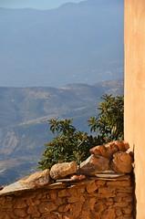 Neflier (Tahia Hourria) Tags: africa tree montagne algeria kabylie hit nora algerie mur arbre ait montain algrie tahia afrique algiers kasbah alger kabyle aissa algrienne nflier bejaa algriens hourria aitaissa atassa