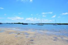 DSC_0014os 1000 (LoxPix2) Tags: water birds landscape boat scenery wildlife australia catamaran loxpix