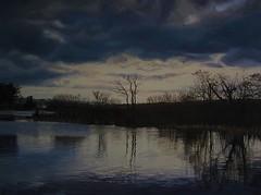 Ballyhonock Lake In February (niall mccarthy) Tags: trees ireland winter irish lake art reflections painting landscape moody scenic calming scene calm eastcork oil waters oils atmospheric glassy realism realistic ballyhonock