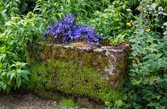Stone Trough (bart7jw) Tags: flowers stone gardens canon garden sigma manor planter hidcote 18250 700d t5i