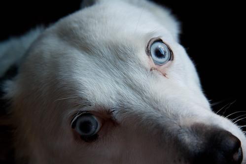 Blue Close Up