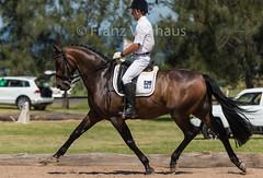 160212_Clarendon_PStG_9566.jpg (FranzVenhaus) Tags: horses sydney australia riding newsouthwales athletes aus equestrian supporters riders officials dressage spectatorsvolunteers