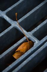 A Grate Leaf 2