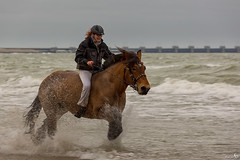 Fun in the surf with a horse (BraCom (Bram)) Tags: sea horse holland beach wet strand canon surf waves nederland nat folklore zeeland zee nl branding paard drafthorse galloping splashes schouwenduiveland neeltjejans golven westerschouwen burghhaamstede canonef70200mm traditie strao trekpaard spetters amzone galopperen bracom stra canoneos5dmkiii stro