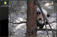 Hi, everyone OK down there (partipersian) Tags: trees mom sister climbing napping meixiang beibei
