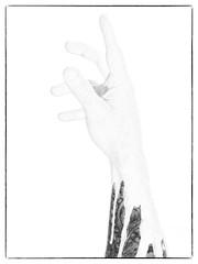 Camouflage (Jason Glyn) Tags: bw monochrome tattoo mono hand arm camouflage