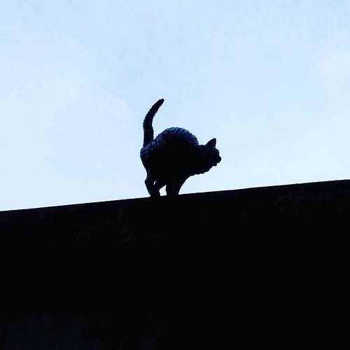 Gato de loiça no Jardim Bordalo Pinheiro no Museu de Lisboa - Palácio Pimenta. #project365 #day38 #picoftheday