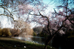 Early Spring in St James's Park