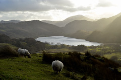 Sunshine, Sheep and Sensible Shoes (daisyglade) Tags: mountains wales roadtrip sheepish absolutelynostilettosrequired