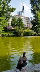 Fourth of July at the Park Pond (grinnin1110) Tags: park bird water germany de hessen frankfurt frankfurtammain hesse wallanlagen egyptiangoose anatidae frankfurtam bockenheimeranlage alopochenaegyptiaca