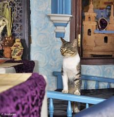Chaouen (F. Nestares) Tags: cat gato chaouen chefchaouen