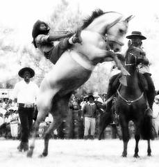 Ramoncito Crdoba (Eduardo Amorim) Tags: brazil horses horse southamerica brasil criollo caballo cheval caballos cavalos pelotas pferde cavalli cavallo cavalo gauchos pferd riograndedosul pampa hest hevonen campanha brsil chevaux gaucho  amricadosul fronteira hst gacho  amriquedusud  gachos  sudamrica suramrica amricadelsur  sdamerika crioulo caballoscriollos criollos jineteada   americadelsud gineteada  crioulos cavalocrioulo americameridionale caballocriollo eduardoamorim cavaloscrioulos