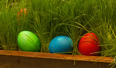 Easter Eggs 8 (rumimume) Tags: red holiday ontario canada green grass yellow canon easter photo still purple sunday sigma niagara eggs coloured picoftheday 2016 550d t2i rumimume