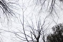 IMG_0402 ( Szczep Wodny Batyk ) Tags: zima wiosna brucetrail snieg wedrowka szczepwodnybaltyk szczepbaltyk silvercreekconservationarea wedrownicy druzyna16ta starsiharcerze