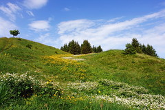 der Sommer (welenna) Tags: flowers summer mountain mountains alps forest landscape switzerland view berge alpen blume wald kantonfribourg