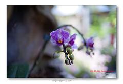 DSC03819 ( Guess TSAI) Tags: flower focus close 28mm mc vivitar cf 282 f20