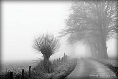 Nebel (grafenhans) Tags: white black weide nebel minolta sony natur feld af alpha 700 wald weiss schwarz weg a700 alpha700 grafenwald 455675300