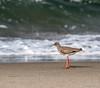 Bird (mlahsah) Tags: sea bird beach birds nikon ngc sa ksa السعودية بحر رمال البحرالأحمر طائر sabya nikond750 بحرالقوز
