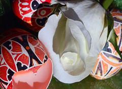 160326 ocrbP 160327  Ththi (thethi (don't like beta groups)) Tags: brussels mars rose belgium belgique bruxelles conceptual hommage brussel blanc tristesse oeuf cass pques espoir belge puret renouveau setflowers albummars faves47 bestof2016
