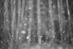 It's snowing (Helena Normark) Tags: snow norway norge snowfall srtrndelag a7 voigtlnder heimdal itssnowing nokton5015 cv5015 nokton50mmf15 sonyalpha7