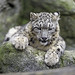 Cute cub on the rock