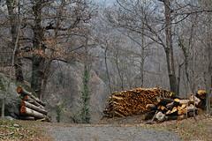 Val d'Aosta - le traverse di Arnad, la pulizia dei boschi (mariagraziaschiapparelli) Tags: primavera valdaosta escursionismo camminata arnad allegrisinasceosidiventa traversediarnad