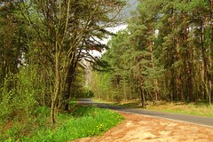 spring in the forest (JoannaRB2009) Tags: road trees sun green nature grass weather clouds last forest landscape spring view path poland polska sunny wiosna lodzkie dzkie kaw