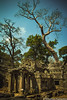 Angkor - Siem Reap - Cambodia (Sébastien Pagliardini) Tags: world voyage morning sunset sky sculpture sun tree stone tom canon river temple photography eos asia cambodge cambodia khmer photographie buddha burma tomb royal pride palace class ciel le siem reap thom asie angkor wat buddism tha phnom penh bayon thailande prohm budhha raider mornig promh fromager reab 60d