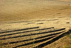 Giornata mondiale della terra Explorer (katefoto-) Tags: colore terra autunno langa ocra zolle