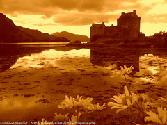 Scotland - Eilean Donan Castle (traccediscatti) Tags: castle lago giallo castello eilean donan scozia margherite